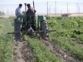 farm 11